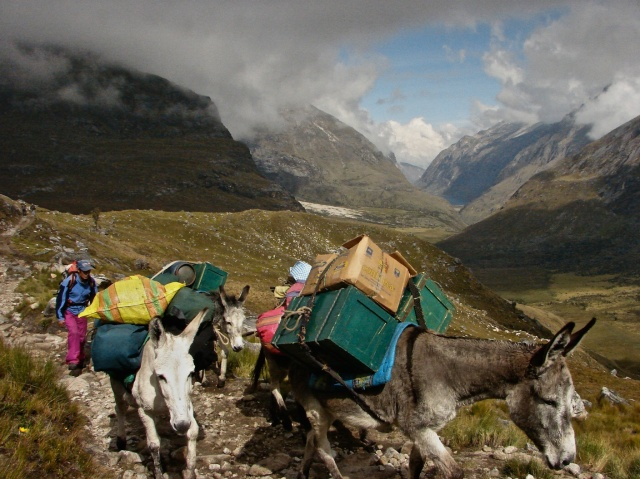 arierro and donkeys approaching Punta Union pass with the Quebrada Santa Cruz below
