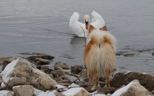 Viggo make one last stand with the just-as-determined  swan