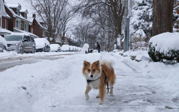 Viggo on our street after the snowstorm