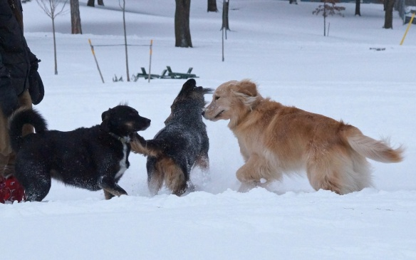 dogs in the park enjoying the snow
