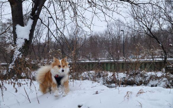 Viggo dashing through the snow-