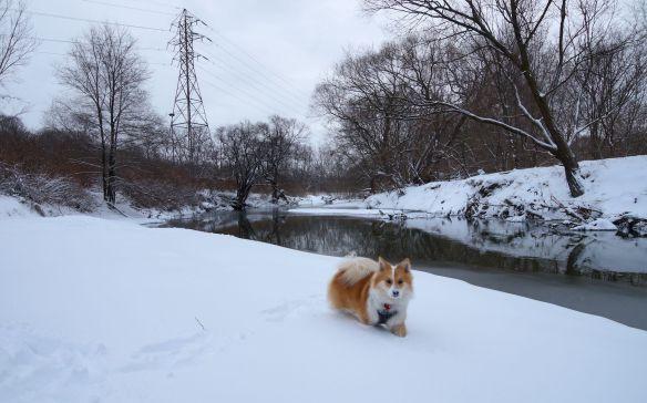 Viggo plowing through the snow near the water's edge