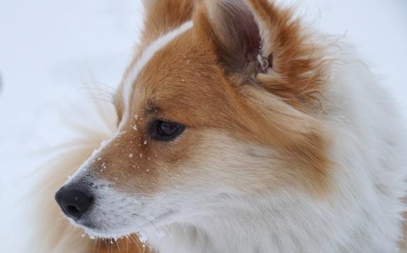 Viggo in the snow