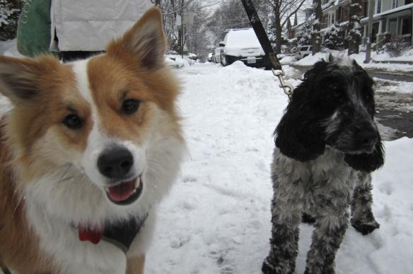 a Roverdale encounter- Viggo meets up with Shorty