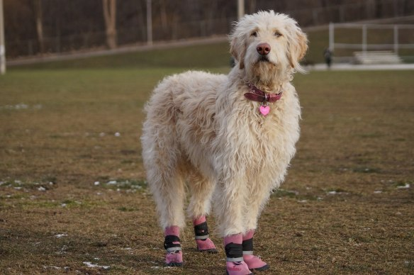 Bella in her hot pink booties at Riverdale Park East