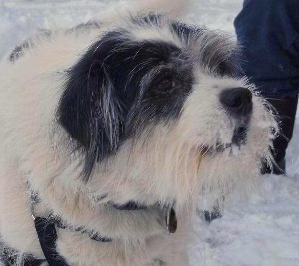 Benny (terrier mix)