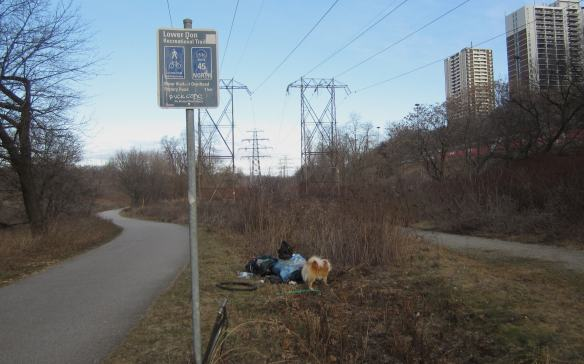 collected garbage sitting on the side of the Lower Don Recreational Trail