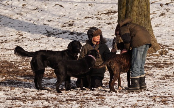 dogs getting some attention at Withrow Park