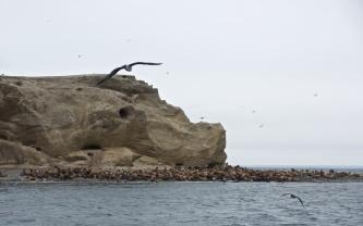 sea lions on Isla Marta near Punta Arenas