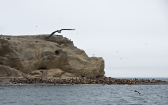 sea lions on Isla Marta near Punta Arenas