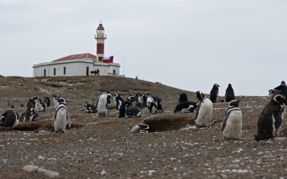 lighthouse and penguins on Isla Magdalena