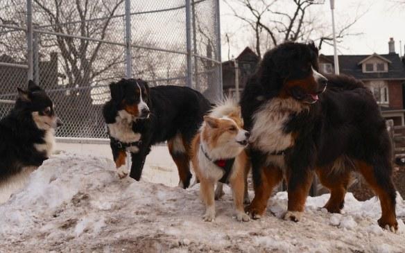 Murphy, Stella, Viggo at Withrow Park