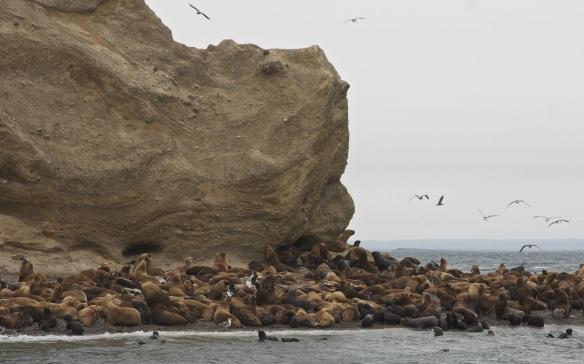 Isla sea lions lounging on the beach