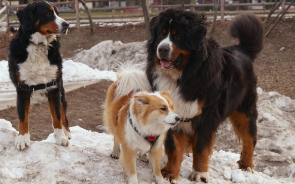 Stella, Viggo, and big Murphy at Withrow Park