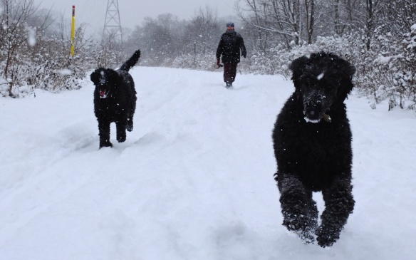 two Porties (Oka and Zuna) running on the Don Valley trail