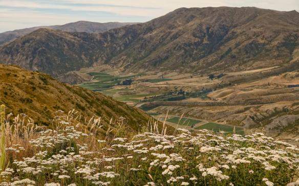 a view of the valley below the crown Range on the way to Arrowtown on SH6