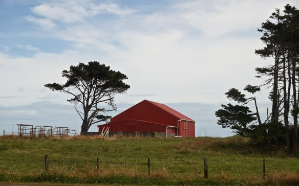 farm building on the way to Ross from Hokitika