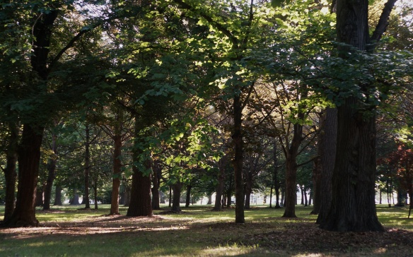 looking through the trees of Hagley Park in Christchurch