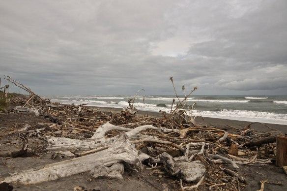 Hokitika driftwood on an overcast day