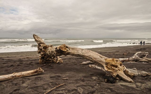 major-driftwood-on-hokitika-beach