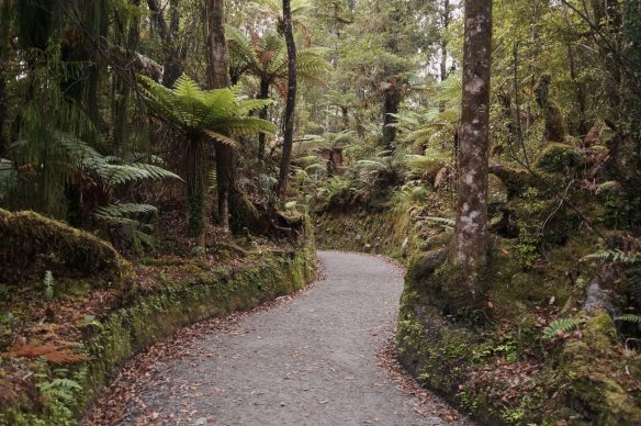 the trail to the Lake Matheson scenic lookout