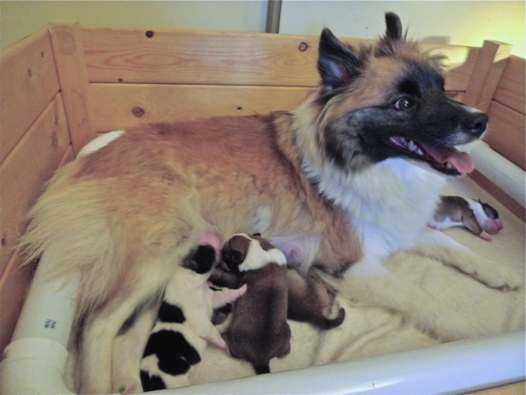 Soley with her 2009 litter