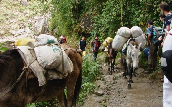traders and trekkers meet on the Annapurna Circuit trail