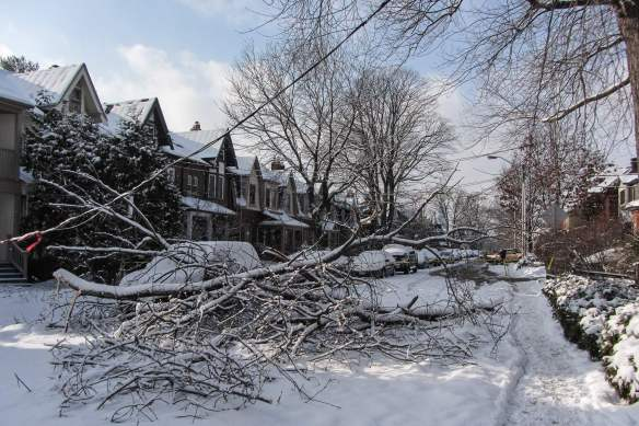 branches across Riverdale Avenue
