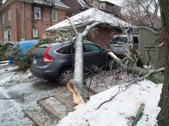 fallen branch and crunched vehicle