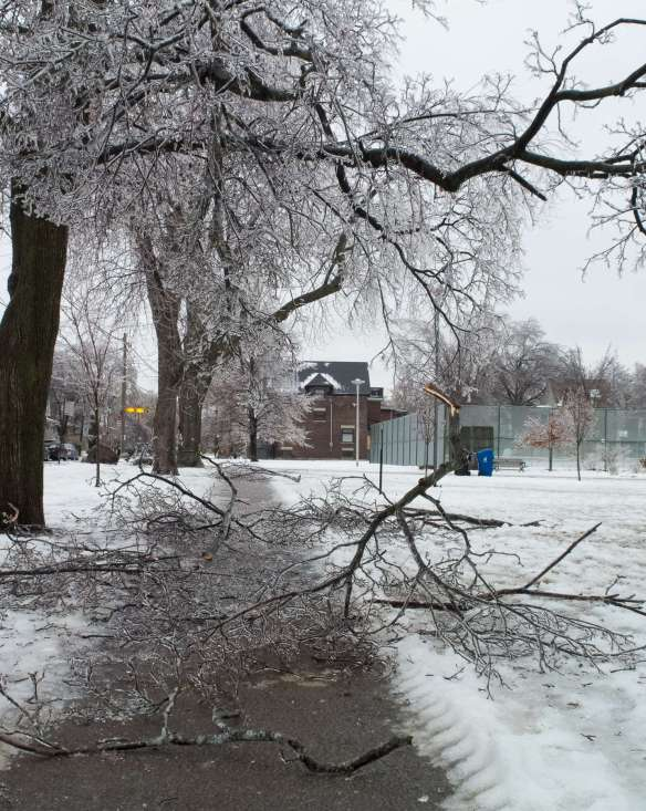 ice and branch-covered Riverdale sidewalk
