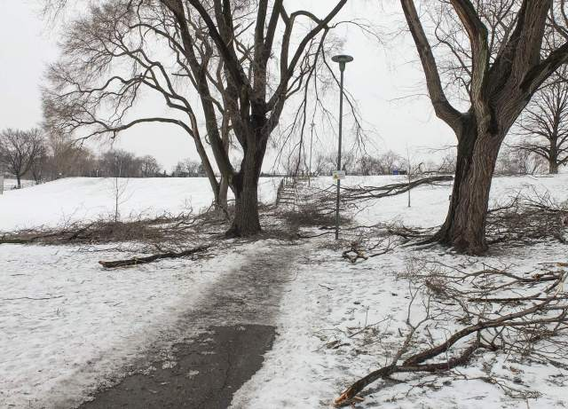 Withrow Park fallen branches