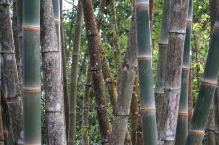 bamboo trucks