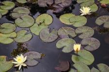 Nuwara Eliya pond