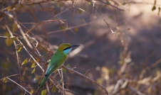 Yala National Park - bird