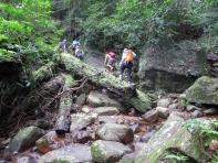 Knuckles Range trail