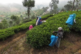 tea pickers seen from the train to Ella