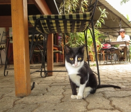 resident cat at Ella's Dream Cafe