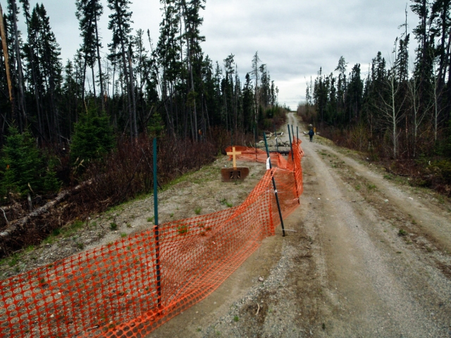 logging road just east of the Witchwood River bridge