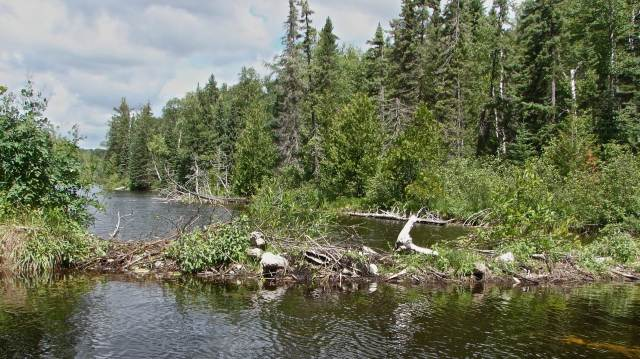 Witchwood beaver dam 2-00 p.m.