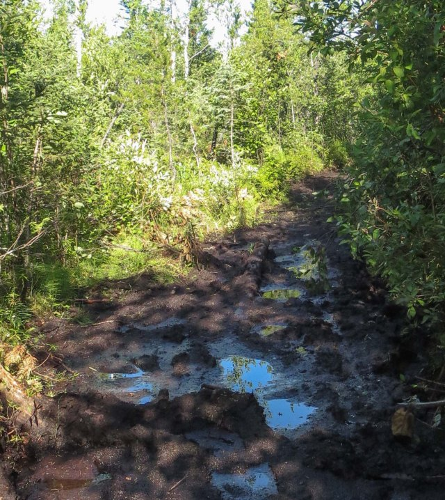 the muddy portage into Knox lake