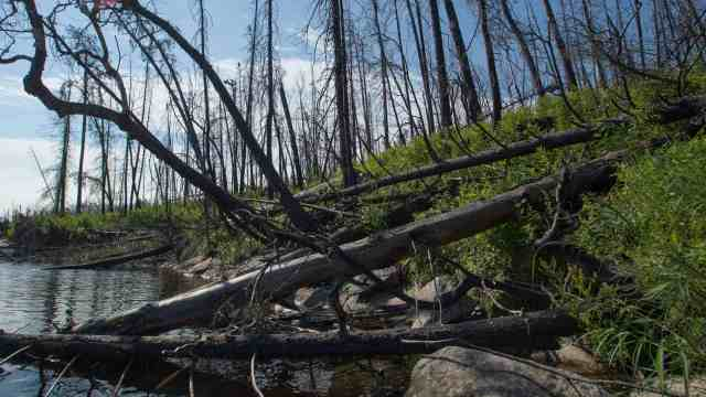 Fire 124 impact on the west shore of Murdock Lake