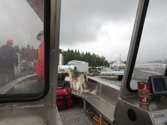 Keeto on guard in Red Lake harbour