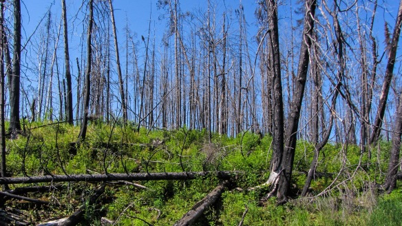 Murdock Lake - evidence of fire...and new growth