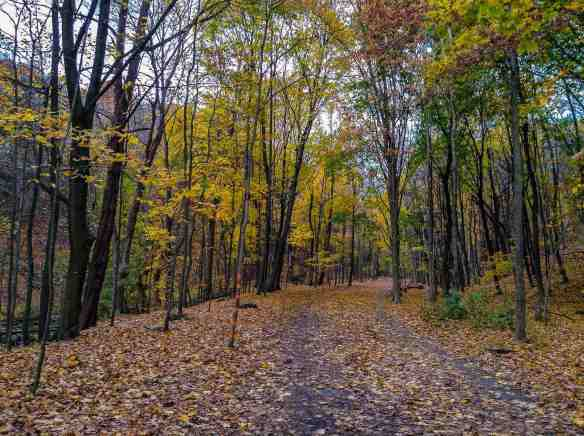 a short stretch of the ravine trail