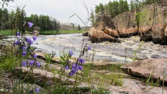 flowers at top of Namay Falls