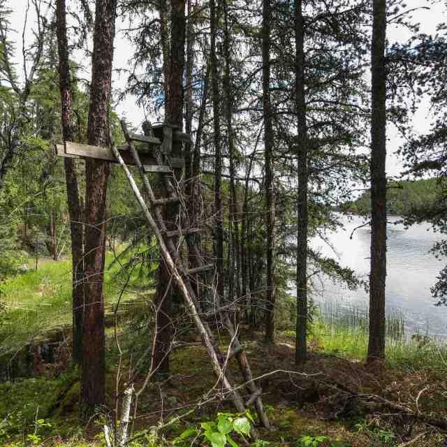 moose hunters' raised platform