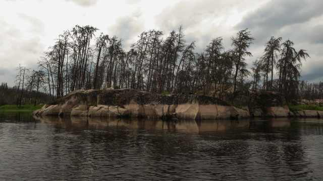 three years after the Bloodvein Fire of 2011 near Kashaweposenatak Rapids