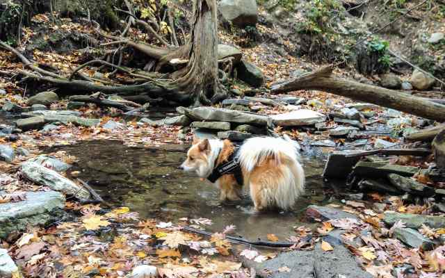 Viggo wading in Mud Creek:Moore Park Ravine