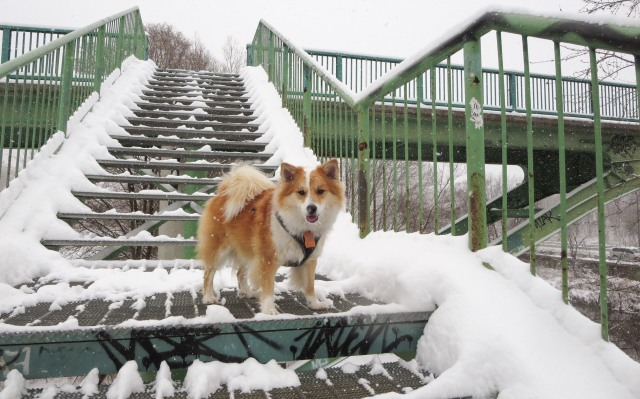 Viggo coming down the footbridge to the Don River valley trail