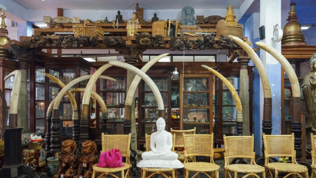 display cases and elephant tusks at Gangarama Temple complex